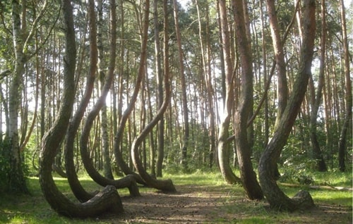 crooked forest adventure